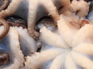 jual gurita takoyaki